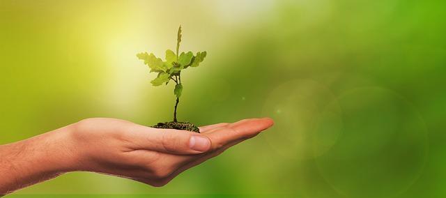 Nachhaltige Geldanlagen mit Fondsstore.com - Wir pflanzen Bäume für jeden neuen Anleger und Kunden